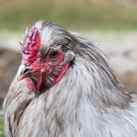 Come and meet the chickens and enjoy fresh eggs for breakfast at Westdown Farm.
