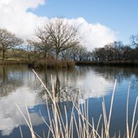 Enjoy fishing at one of the lakes at Westdown Farm, come ad visit!